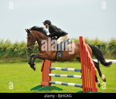 show jumping horse - Stock Photo