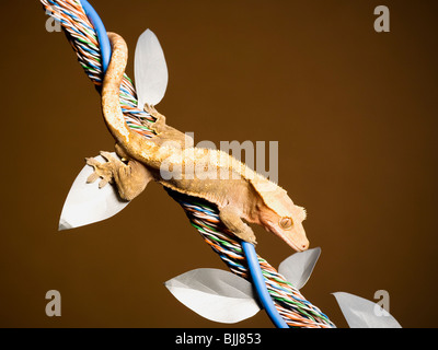 Two lizards on cable with leaves - Stock Photo