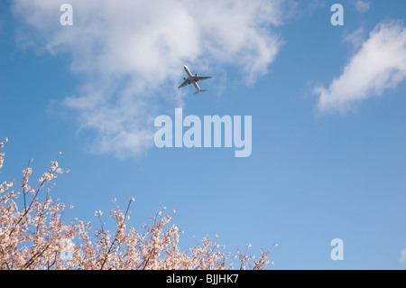 Plane flying across a blue cloudy sky above pink cherry blossoms