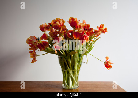 Flowering, almost faded tulips - Stock Photo
