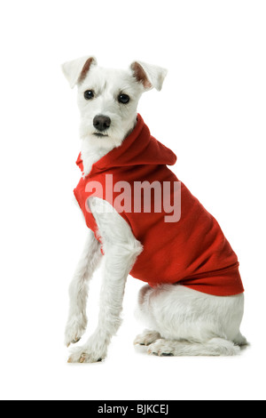 Casually Dressed woman training in hoodie dog to sit - Stock Photo