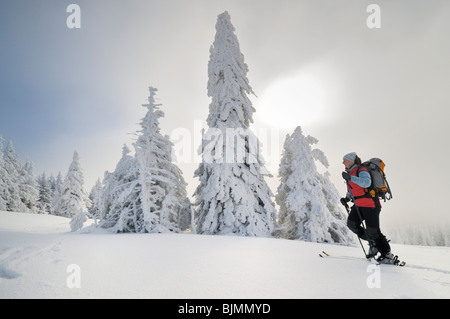 Ski hiker ascending, Mt. Unterberg, Lower Austria, Austria, Europe - Stock Photo