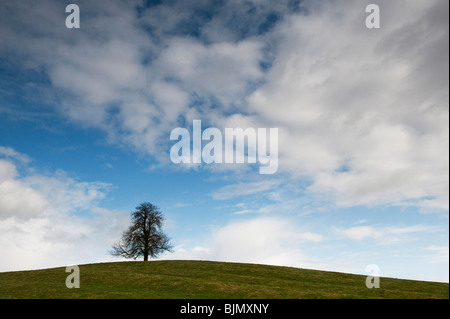 Winter Horse Chestnut Tree in the English countryside. UK - Stock Photo