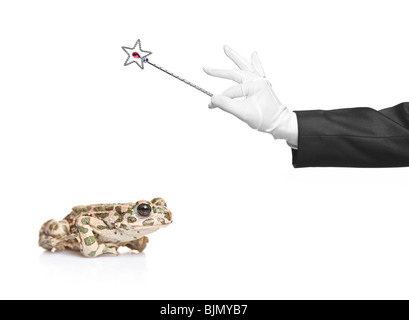 Magician holding a magic wand and a frog - Stock Photo