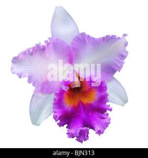 Single orchid flower isolated on white - Stock Photo
