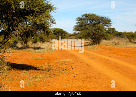 Red-brown laterite soil with typical bush landscape and dirt road in the Madikwe Game Reserve, South Africa - Stock Photo