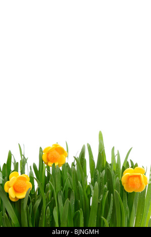 Flowerpot with green grass isolated on the white background. - Stock Photo