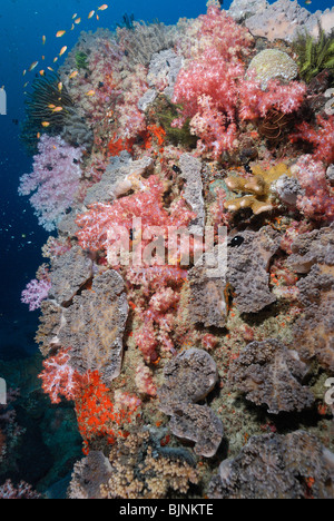 Soft coral on a wall in the Similan Islands, Andaman Sea - Stock Photo