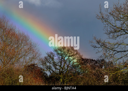 Rainbow over trees in winter, UK - Stock Photo