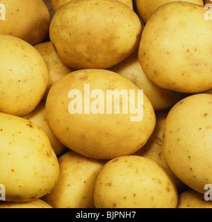 Tubers of Maris Piper potatoes ex shop or supermarket - Stock Photo