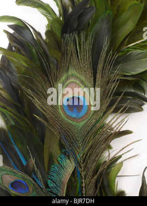 Close-up Feather Blue Green Pattern Peacock Bird - Stock Photo
