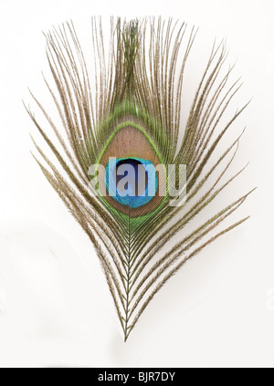 Close-up Feather Blue Green  Peacock - Stock Photo