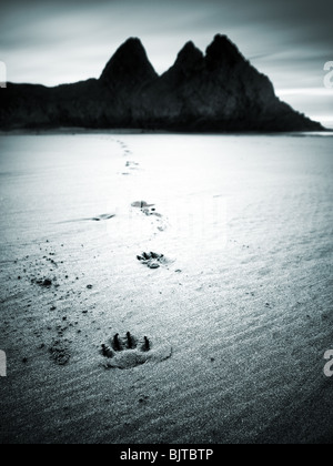 Dog footprints in the sand at Three Cliffs Bay, Gower. - Stock Photo