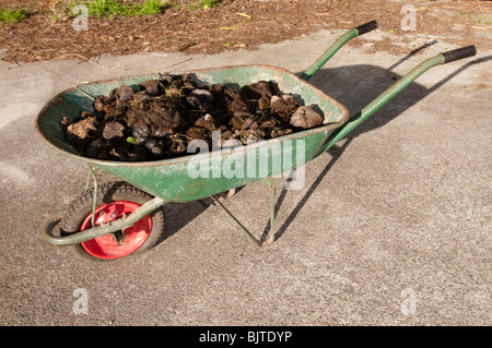 Pile of fresh horse manure in wheelbarrow - Stock Photo