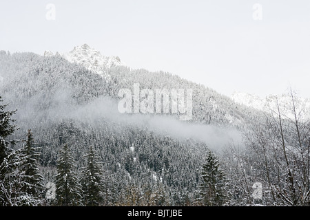 Snow covered trees on mountainside - Stock Photo