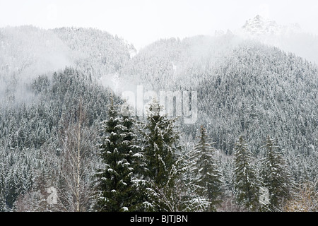 Trees covered in snow in french alps - Stock Photo