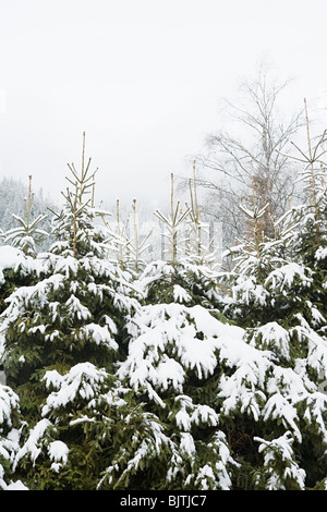 Trees covered in snow - Stock Photo