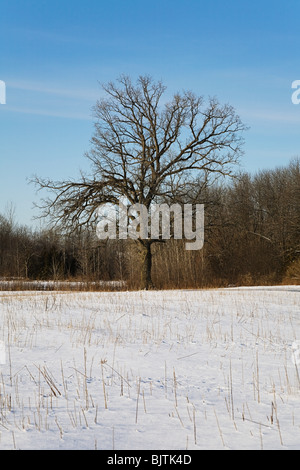 Tree in winter - Stock Photo