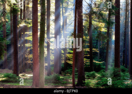 autumn forest scene with sun rays shining through branches - Stock Photo