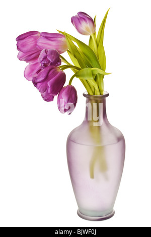 Purple Spring Tulips Isolated on a Pure White Background - Stock Photo