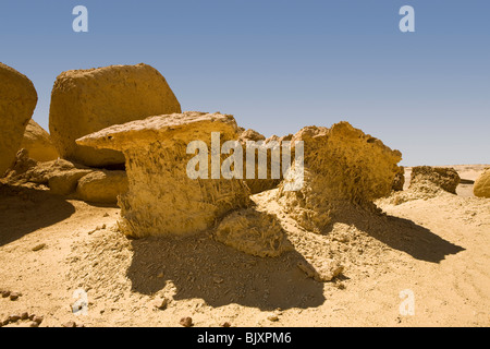 Fossilised mangrove tree roots in the Valley of The Whales, Wadi El-Hitan, Western Desert of Egypt - Stock Photo