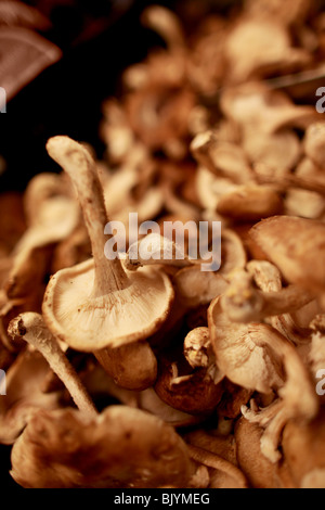 Shiitake Mushrooms in grocery store, market setting.  Group of mushrooms, organic, grown in Pennsylvania, USA - Stock Photo