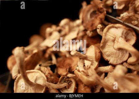 Shiitake Mushrooms in grocery store, market setting.  Group of mushrooms, organic, grown in Pennsylvania, USA - Stock Photo