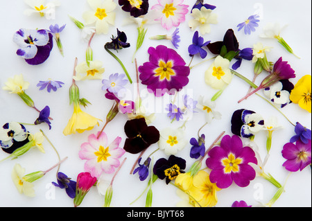 Spring flower heads on white background - Stock Photo