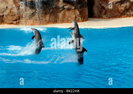 Dolphin show, Loro Parque, Tenerife, Canary Islands, 2007. - Stock Photo