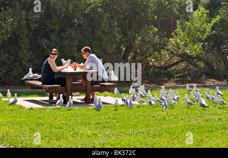 Gulls mob a couple trying to eat a picnic lunch in the park - Stock Photo