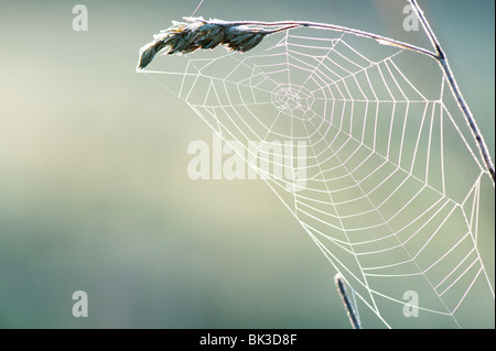 Frosty spiders web on a piece of grass in the English countryside. UK - Stock Photo