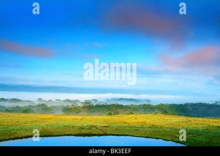 Sunny meadow and lake . Africa. Kenya. Lake Nakuru - Stock Photo