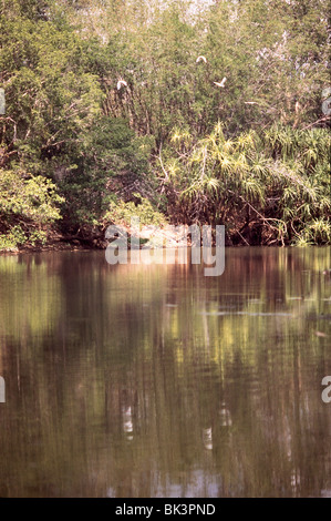 Water and birds in Kakadu National Park, near Darwin, in the Nothern Territory of Australia - Stock Photo