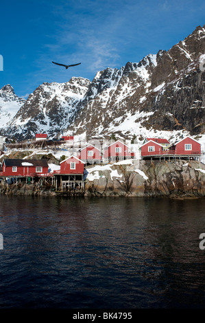 Traditional red wooden Rorbu fishermens` huts in village of Henningsvaer in Lofoten Islands in Norway - Stock Photo