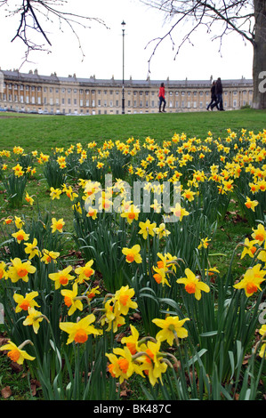 Daffodils in spring with the Royal Crescent in background, Bath, Somerset, England, UK - Stock Photo