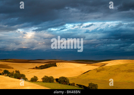 Sunlight breaks through the clouds to light up mature wheat fields in the Palouse region of Washington - Stock Photo