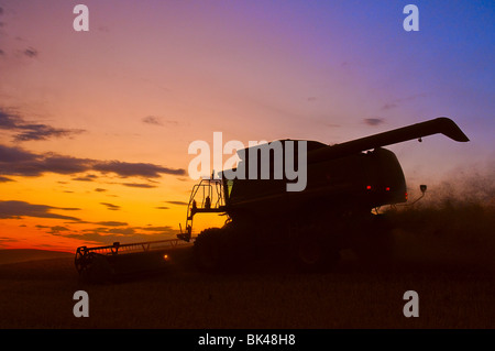 A combine harvests wheat at sunset on the hills of the Palouse region of Washington - Stock Photo