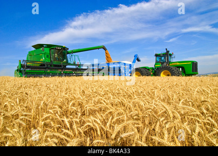 A John Deere combine harvests soft white wheat in the Palouse region of Eastern Washington while unloading on the - Stock Photo
