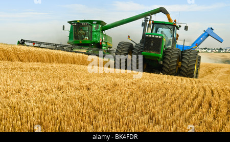 A John Deere combine harvests soft white wheat while unloading on the go in the Palouse region of Eastern Washington - Stock Photo