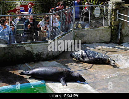 visitors at the national seal sanctuary in gweek, cornwall, uk - Stock Photo