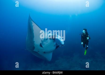 Manta ray and scuba diver, Mergui Archipelago, Burma, Andaman Sea, Indian Ocean - Stock Photo
