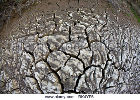 Dry cracked ground in a dried stream bed during a desert drought. Big Bend National Park, Texas, United States. - Stock Photo