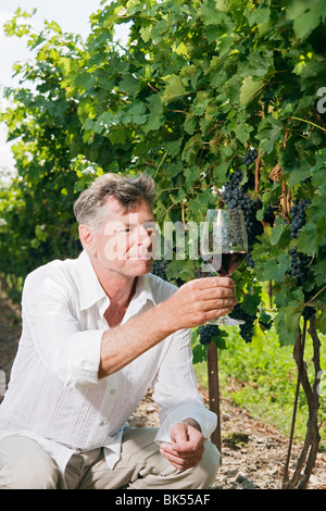 Man in Vineyard Examining a Glass of Wine - Stock Photo