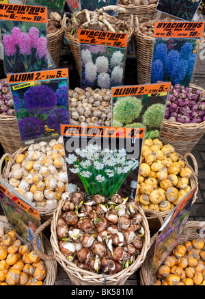 Flower bulbs for sale in flower market in central Amsterdam in Netherlands - Stock Photo