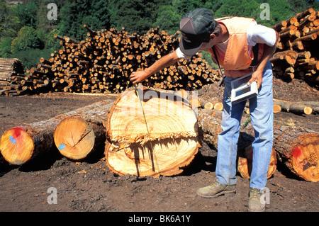 released scaler measures logs at lumber mill Scotia California - Stock Photo