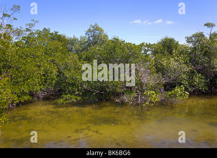 Mangroves, J N Ding Darling wildlife refuge, 'Sanibel Island', Florida, USA - Stock Photo