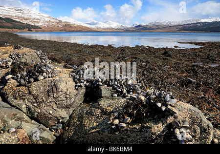 Beautiful late spring day with snow capped mountains at Loch Beg on the Isle of Mull, Scotland - Stock Photo