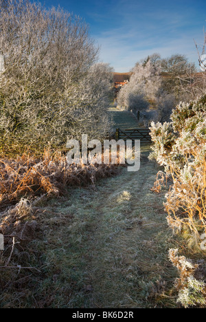 A frosty Mid Wales Lane on a Winters Day - Stock Photo