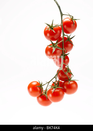 cherry tomatoes on stem on white background - Stock Photo