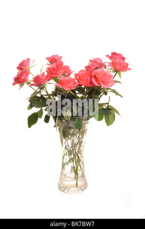 Roses Photographed in a vase in studio against a white background - Stock Photo